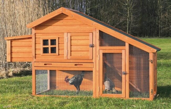 The Best Chicken Coop Options for the Homestead