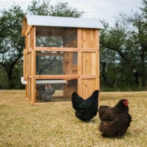 The Best Chicken Coop Options for the Homestead: Roost & Root