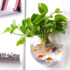 最好的鱼缸选项:ock墙鱼泡沫