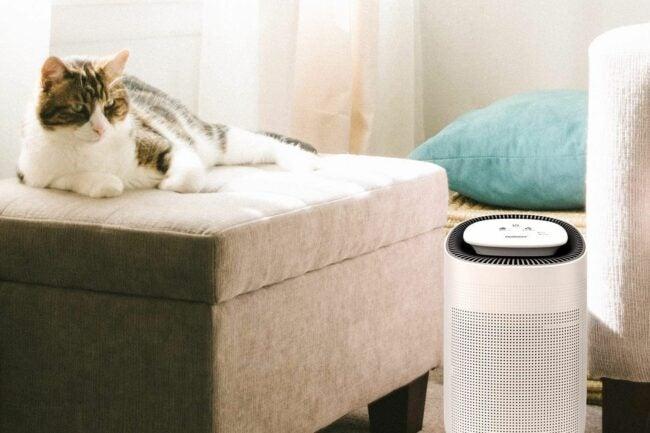 用于宠物选项的最佳空气净化器