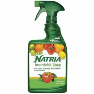 The Best Insecticide Option: Natria 706230A Insecticidal Soap Organic Miticide