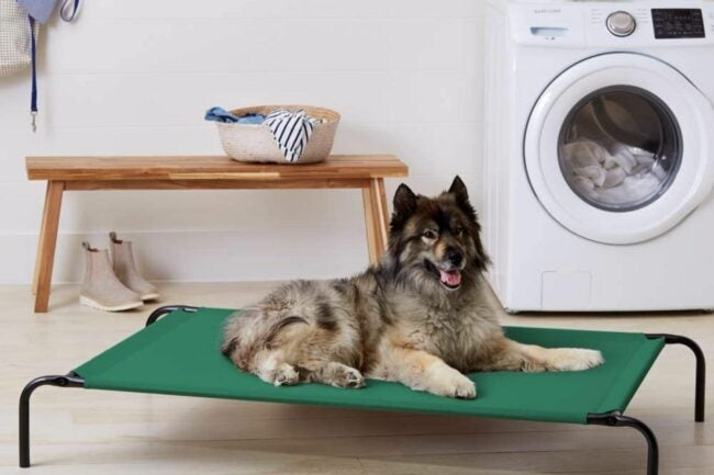 The Best Elevated Dog Bed Option
