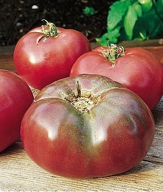 Growing Tomatoes - Cherokee Purple