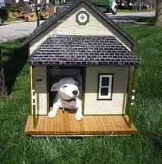 Little Dog House