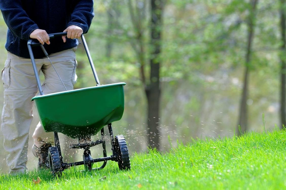 Fall Lawn Maintenance - Overseeding