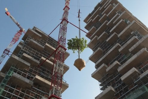 Trees lifted for planting at Bosco Verticale