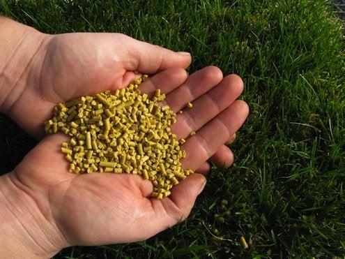 Fertilizing Grass - Corn Gluten Meal