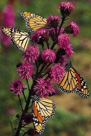 How to Make a Butterfly Garden - Marigold Group