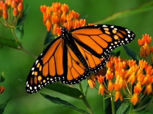 How to Make a Butterfly Garden