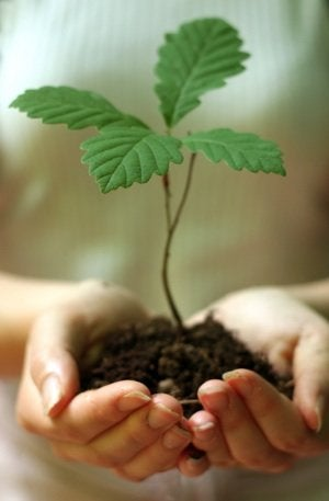 Plant a Tree - Seedling