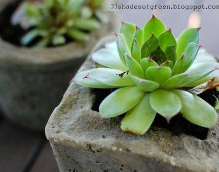 Diy planters hypertufa