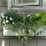 Tobeylane.com window box image 19