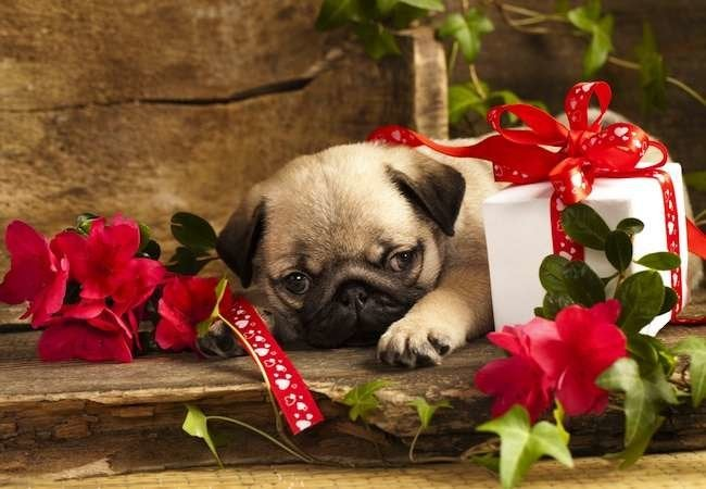 Bob Vila's Holiday Gift Guide: For Pets