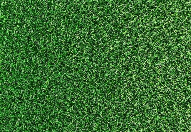 Top 5 Tips for a Greener Lawn