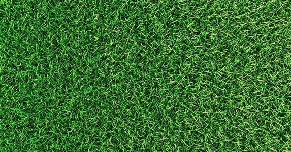 Top-5-tips-for-a-greener-lawn_shutterstock