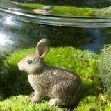 Etsy moss terrariums thumbnail
