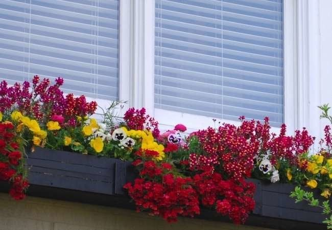 Window Boxes That Raise the Bar