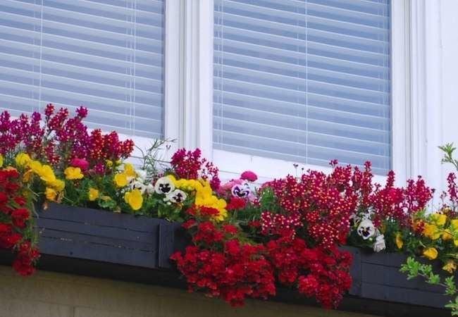 Window Boxes That Raise the Bar