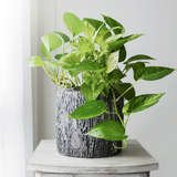 These 10 Houseplants Improve Indoor Air Quality