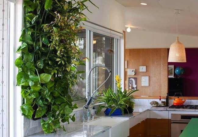 10 Great Ways to Grow Your Walls Green