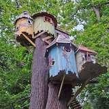 Treehousethumb