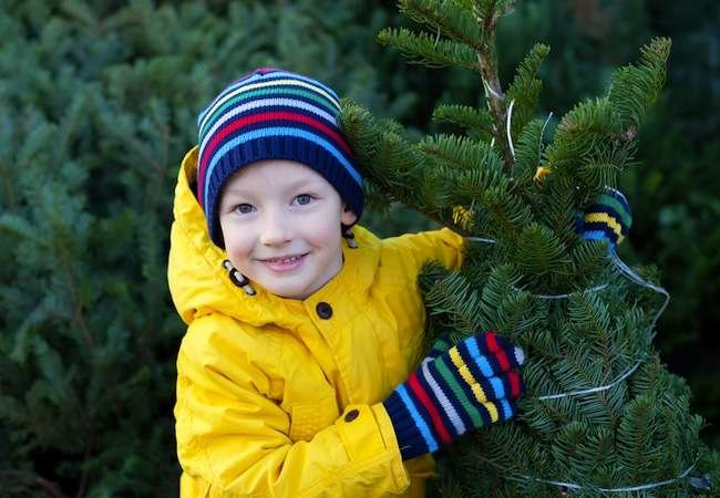 How To: Choose the Best Christmas Tree (and Keep It Fresh)