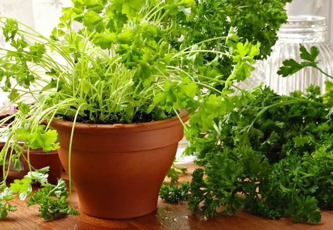 Vegetables On Demand: How to Grow Edible Plants Indoors—Starting from Seeds!