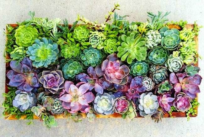 11 Creatively Stylish Ways to Display Succulents