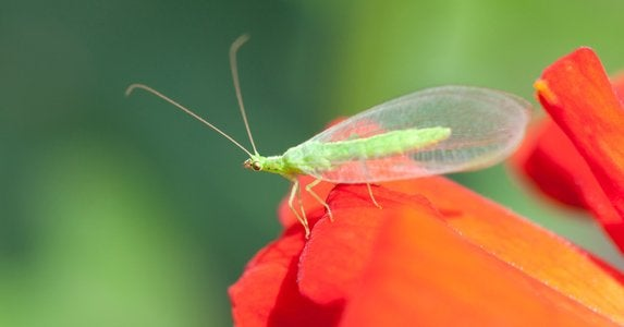 How to Get Rid of Bugs - 10 Time-Tested Tips - Bob Vila