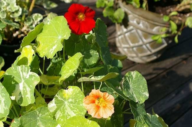 The 12-Inch Farm: 10 Foods You Can Grow in Containers