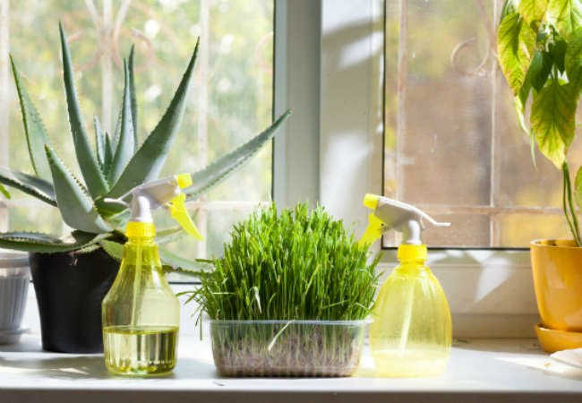 How to Help Your Houseplants Survive the Winter