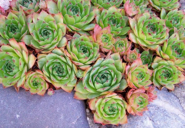 Liven Up Your Winter Porch With 8 Cold Loving Plants