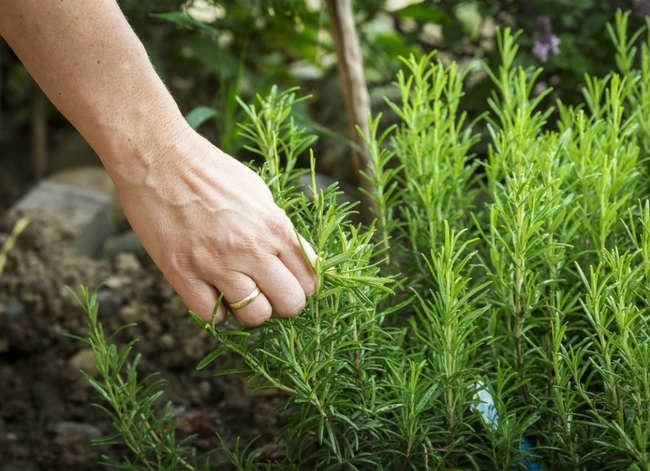 7 Herbs That Clean House