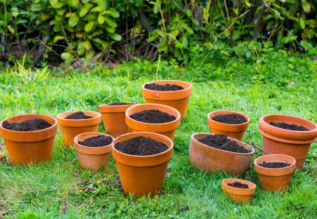 7 Smart Ways to Save Water in the Yard