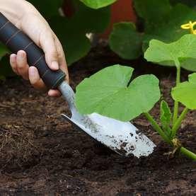 """19 """"Zero Dollar"""" Garden Hacks"""