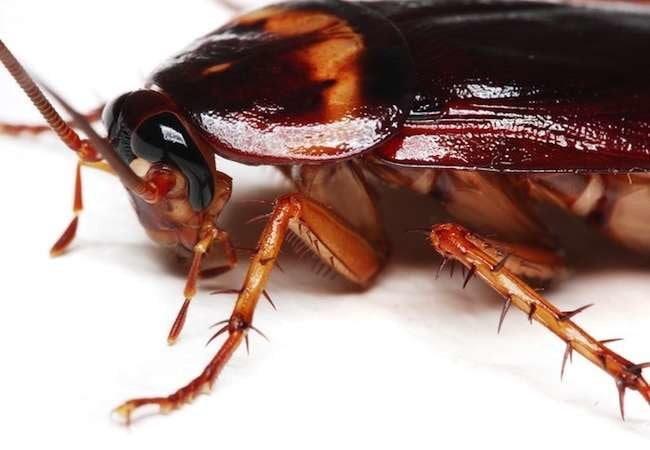 7 Facts About Cockroaches You Won't Want to Believe