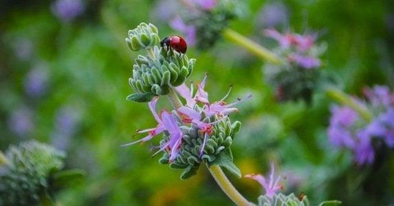 Garden_pest_cover