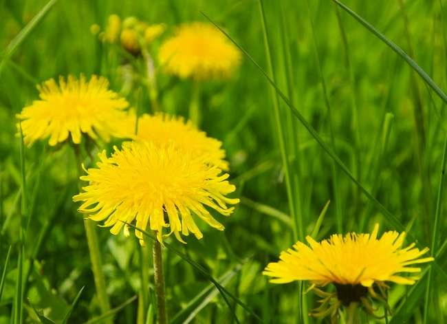 Keep, Don't Kill: 9 Weeds to Welcome