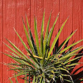 15 Plants Never to Grow in Your Yard