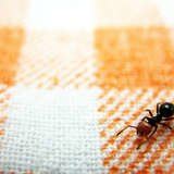 A Dozen 10-Minute DIYs for a Pest-Free Home