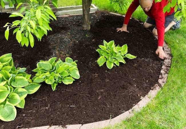10 Things to Do Now for a Better Garden Next Year