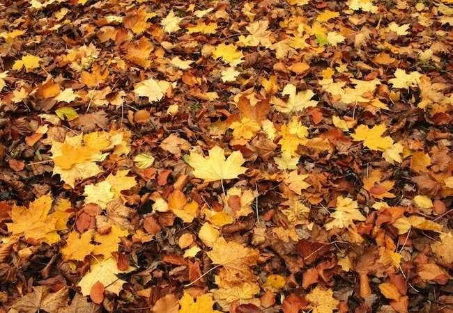 9 Tricks for Fast and Easy Fall Yard Cleanup