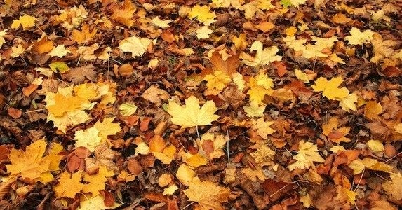 Fall-yard-cleanup-cover