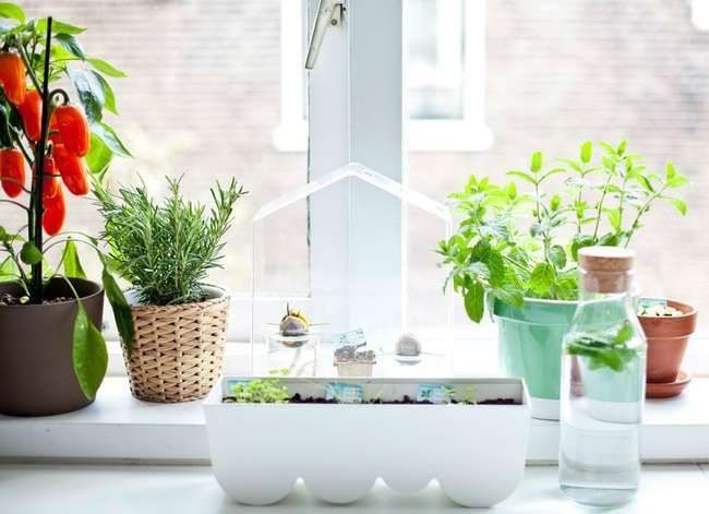 The Best Plants for Every Room of the House