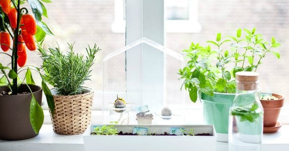 Houseplants-herbs
