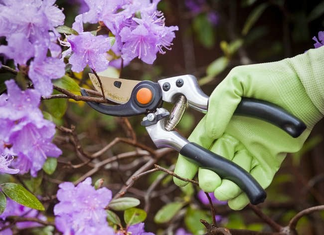 11 Age-Old Gardening Tips to Ignore Completely