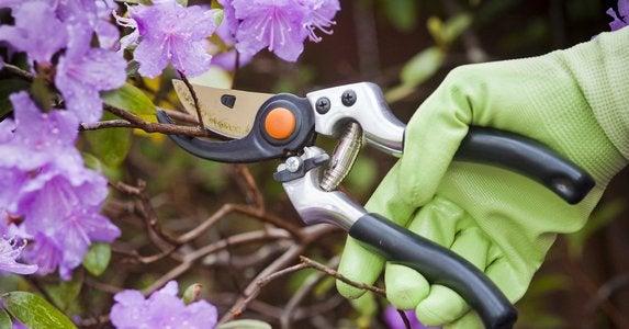 Gardening myths 10