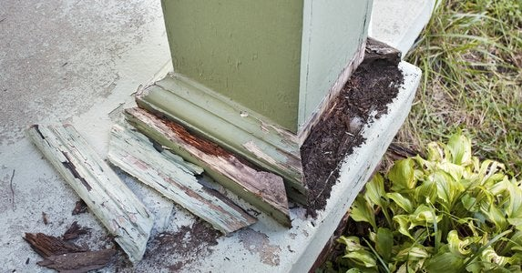 Termite and pest damage
