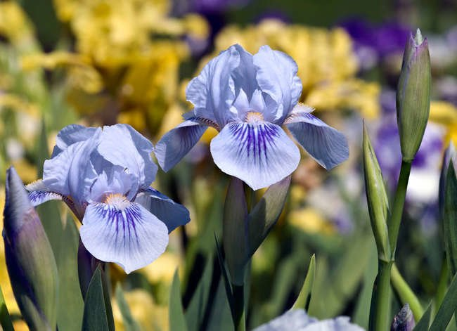 14 of the Best Plants for Your Drought-Tolerant Garden