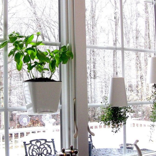 10 Tiny Gardens You Can Grow on Your Windowsill